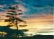 anchor Sunset 2