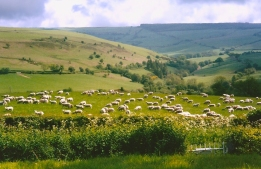 view with sheep